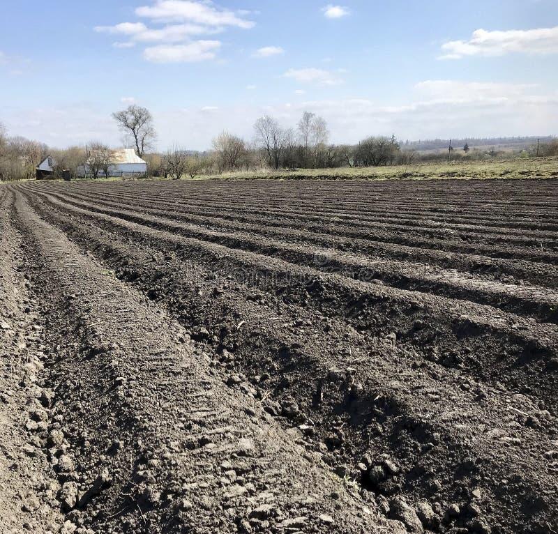 Plogat fält för potatis i brun jord på den öppna bygdnaturen arkivbild