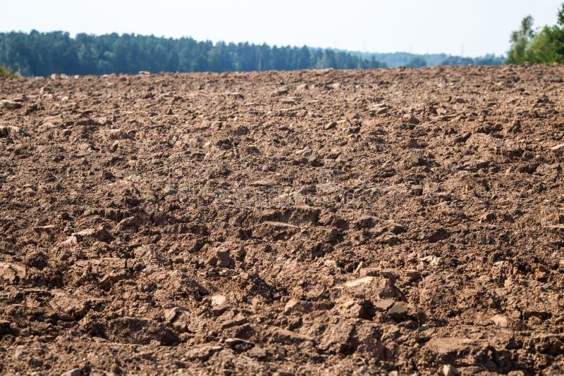 Plogat fält med traktorspår i vårtid, lantgårdjordbakgrund, sådde sädesslag Selektivt fokusera royaltyfria foton