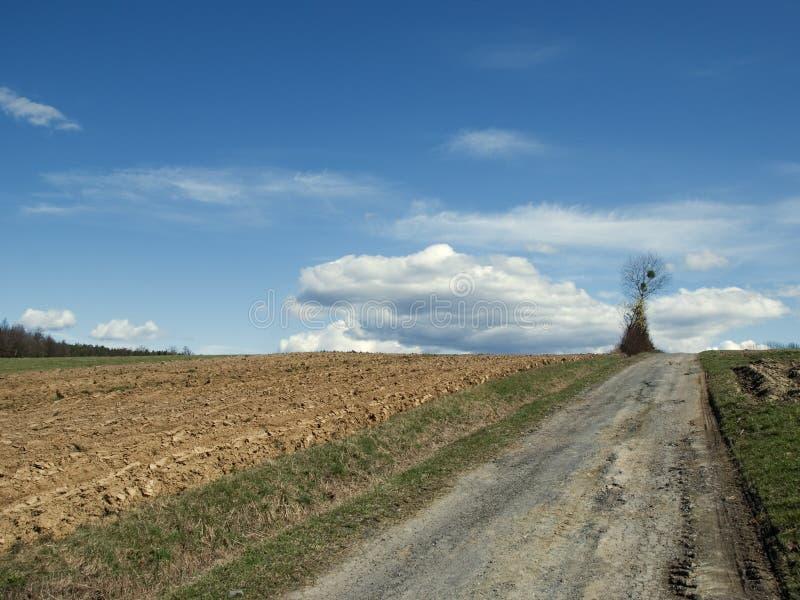Plogat fält och ett ensamt träd royaltyfri foto