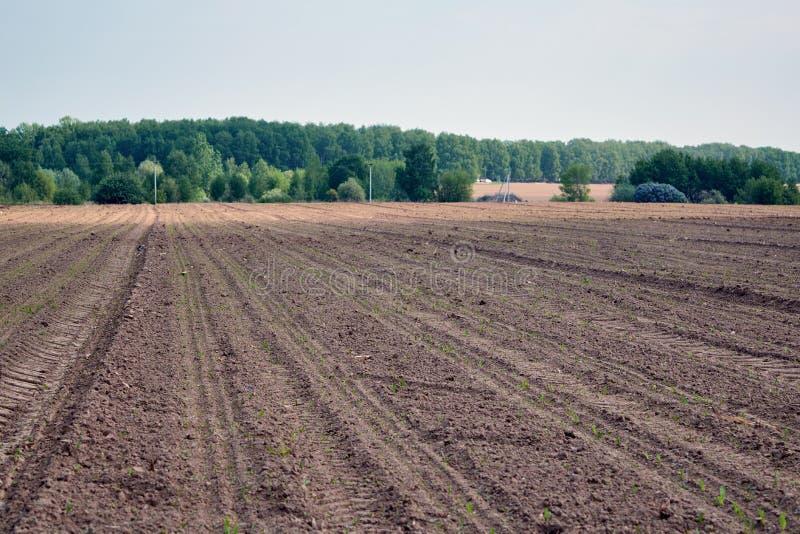 Plogat land med spårar av traktoren Synliga växtgroddar royaltyfria bilder