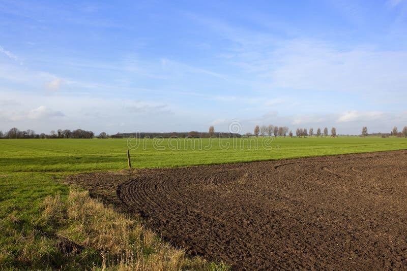 Plogjord och vete för torra gräs royaltyfri fotografi