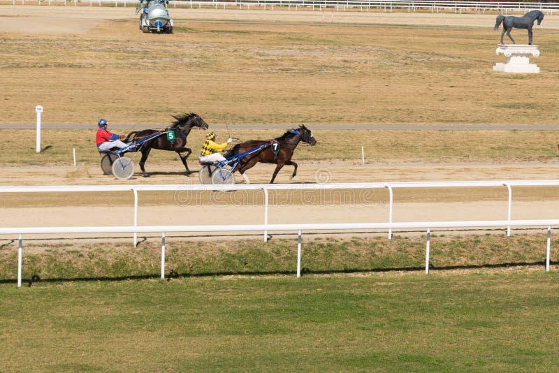 Ploiesti, Romania - October 07, 2018: A trotting horse race held on Ploiesti Hippodrome in Prahova, Romania royalty free stock image