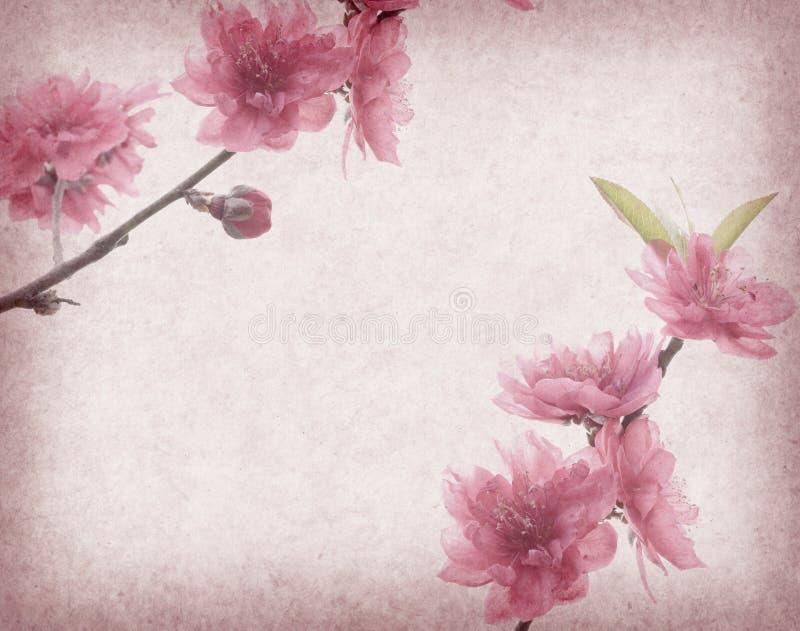 Download Plommonblomning På Gammalt Antikt Tappningpapper Arkivfoto - Bild av natur, plommon: 76702926