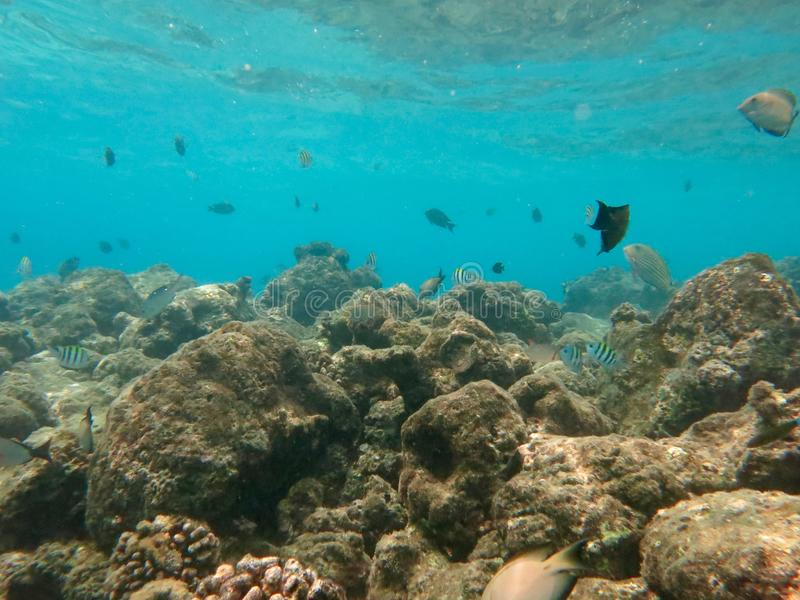 Plongée à l'air en Maldives images libres de droits