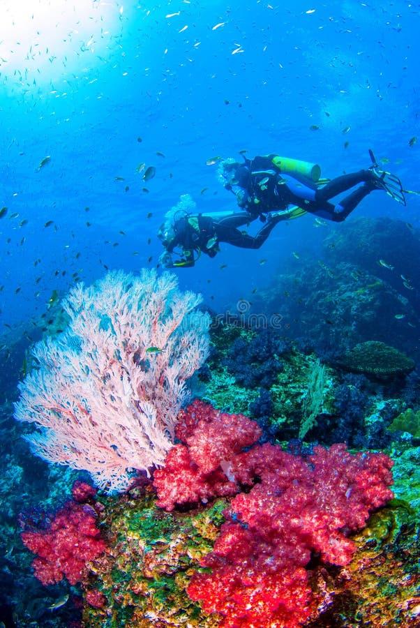 Plongée à l'air Similan, mer d'Andaman du nord Thaïlande images stock