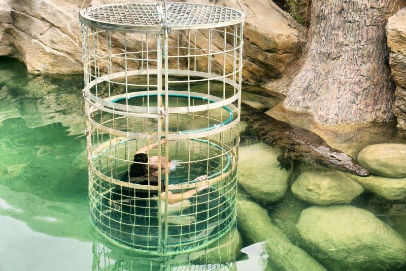 Plongée de cage de crocodile photo stock