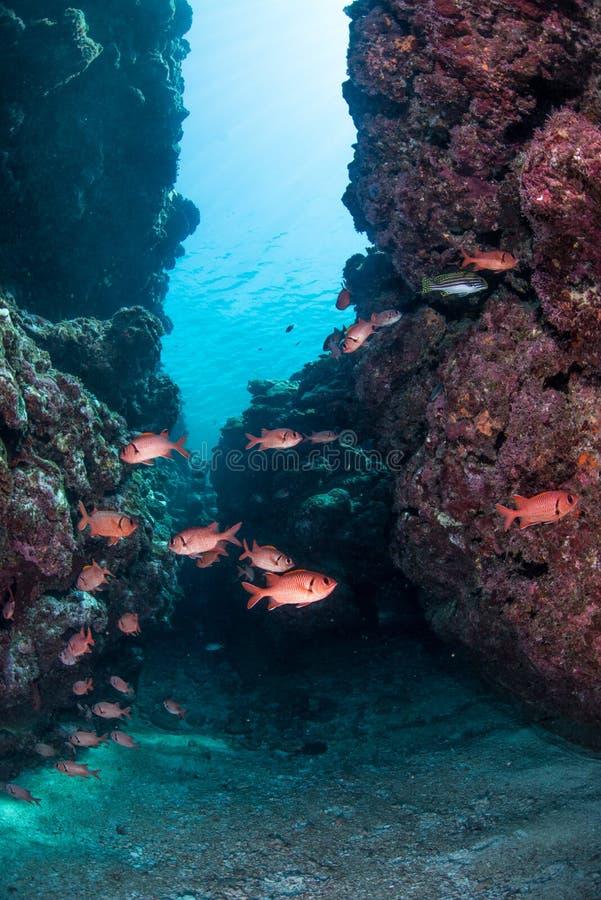 Plongée de caverne image libre de droits