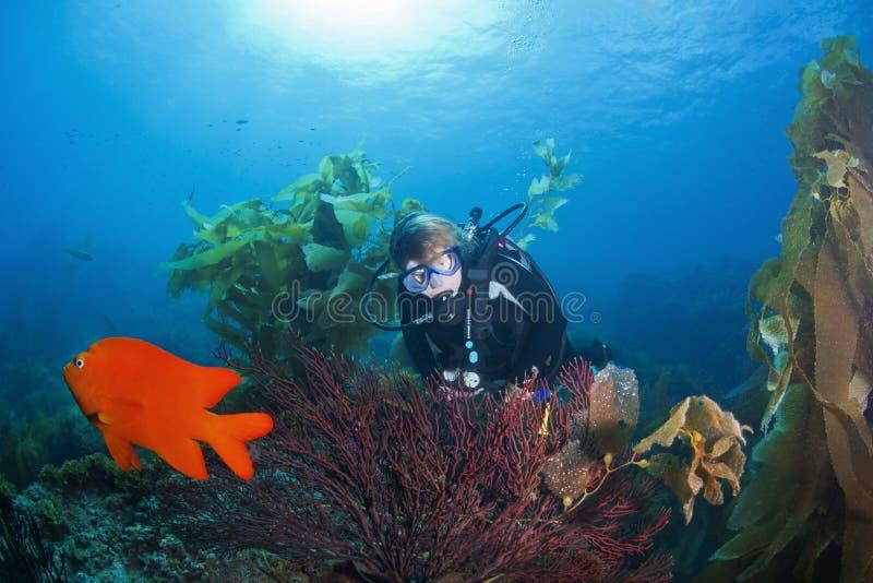 Plongeur autonome et corail de Gorgonian images stock