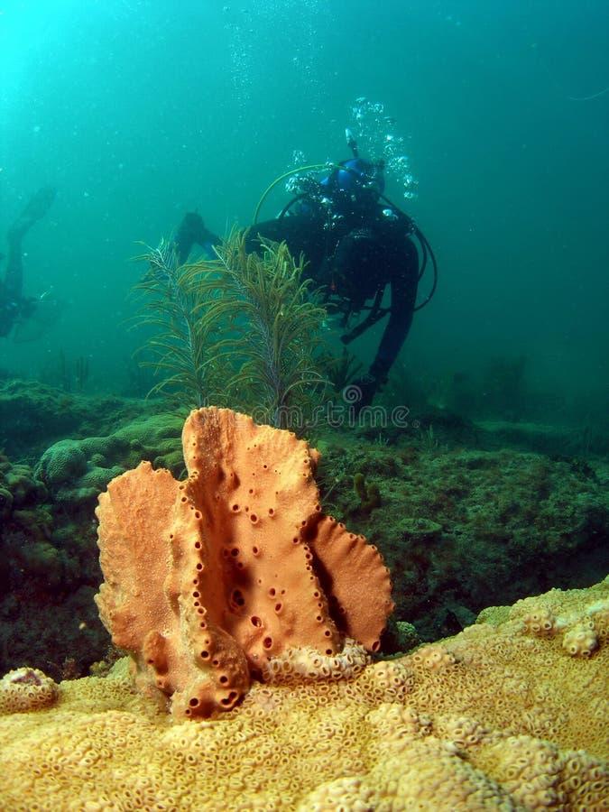 Plongeur autonome et corail mou images stock