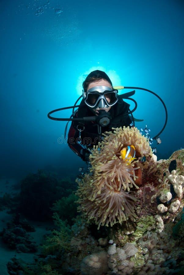 Plongeur autonome féminin observant des poissons de clown photo stock