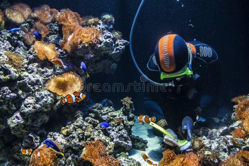 Plongeur autonome nettoyant l'aquarium images stock