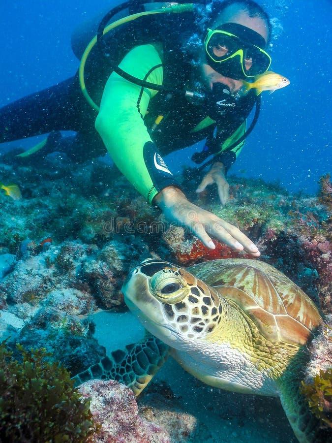 Plongeur autonome touchant la tortue sous l'eau photographie stock libre de droits