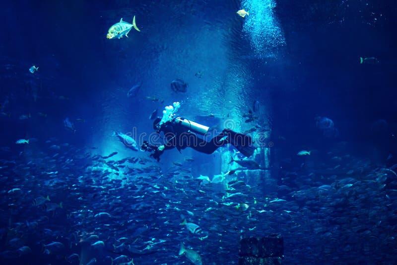 Plongeur d'homme plongeant à l'arrière-plan mystique bleu avec des poissons photographie stock
