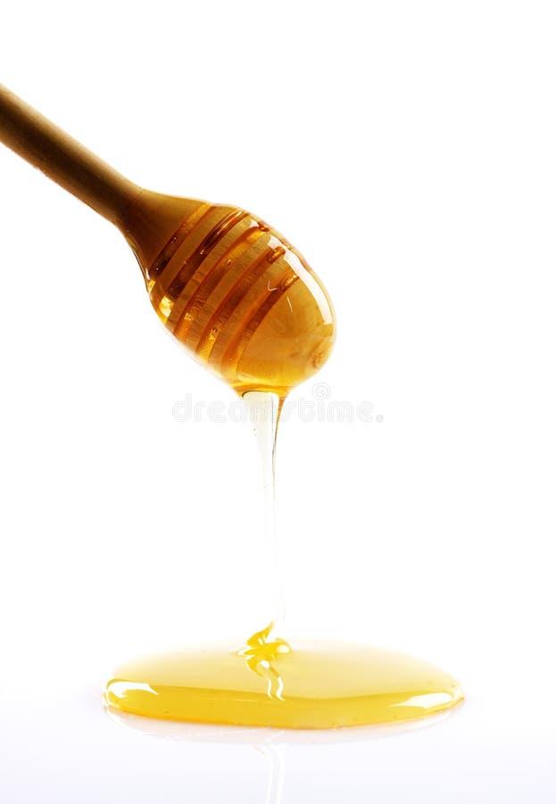 Plongeur de miel photo stock
