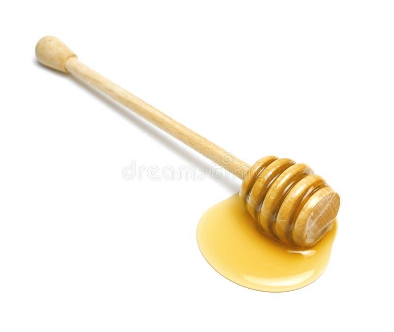 Plongeur de miel image stock