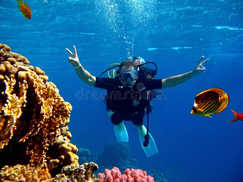 Plongeur en mer images libres de droits