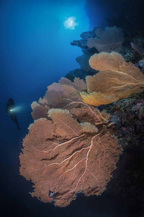 Plongeur et fan photographie stock