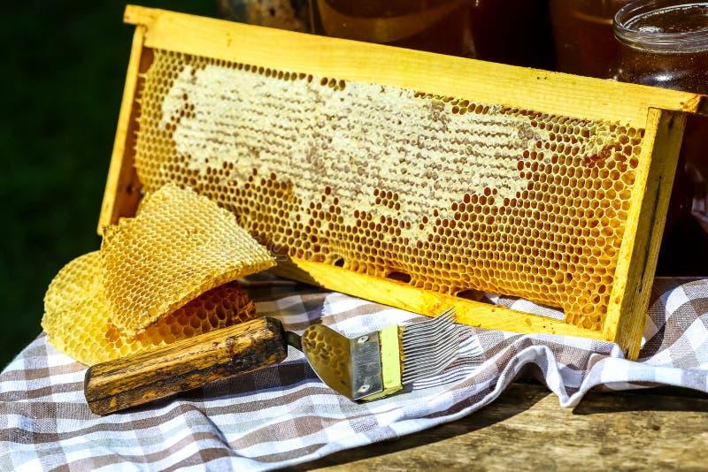 Plongeur et nids d'abeilles en bois de miel dans le cadre en bois avec de pleines cellules de miel scellées avec de la cire, outi image libre de droits