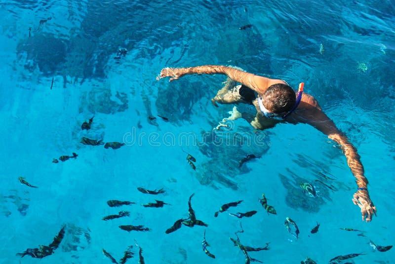 Plongeur et poissons images stock