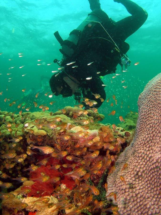Plongeur et quelques mouvements circulaires vitreux photo stock