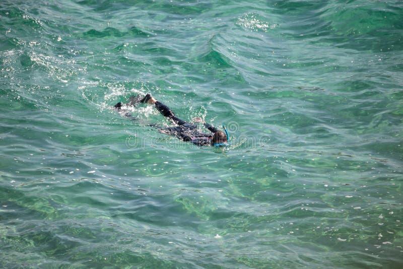Plongeur naviguant au schnorchel recherchant des poissons dans les eaux chaudes photo stock