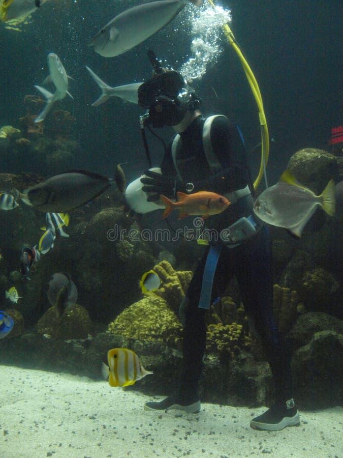 Plongeur tropical de poissons image libre de droits
