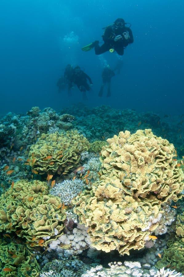 Plongeurs autonomes au-dessus du récif coralien photo stock
