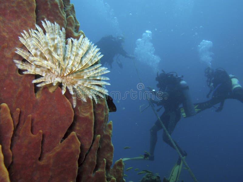 Plongeurs autonomes et ver de terre de tube photographie stock