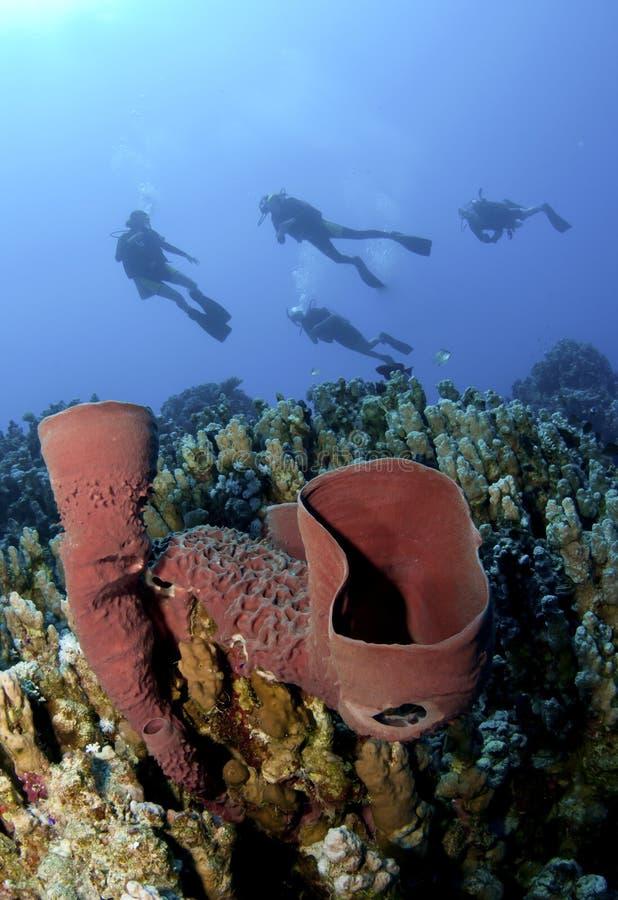 Plongeurs autonomes sur le récif coralien avec l'éponge pourprée image stock