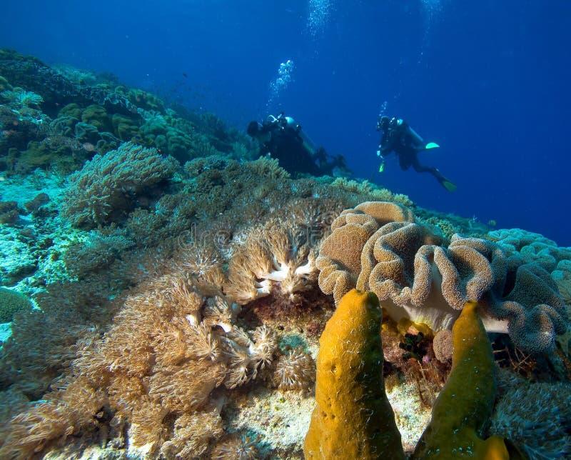 Plongeurs par le récif coralien photo stock