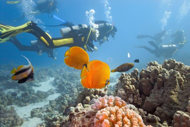 Plongeurs sur le récif coralien photos stock