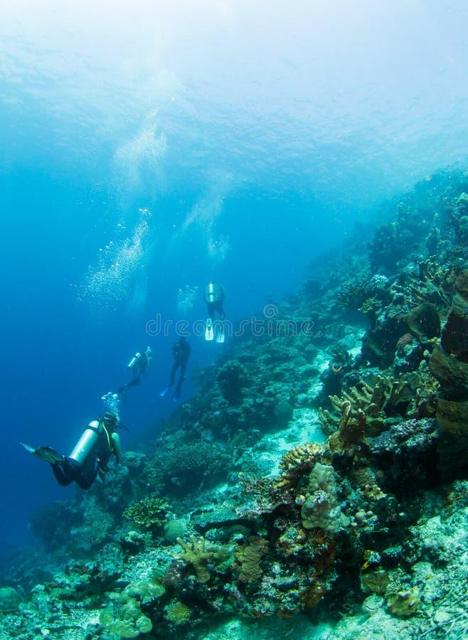Plongeurs sur un récif coralien image libre de droits