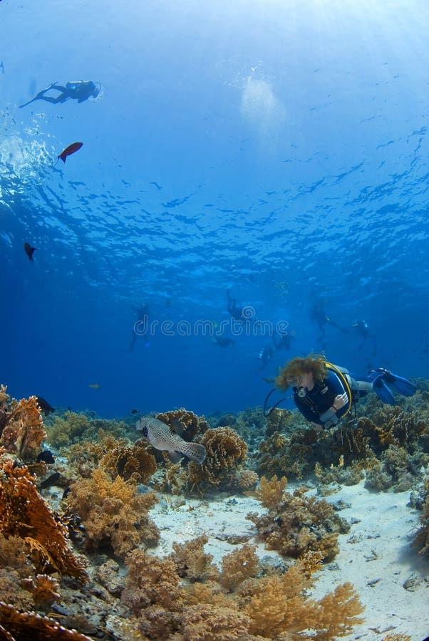 Plongeuse de femme photo libre de droits