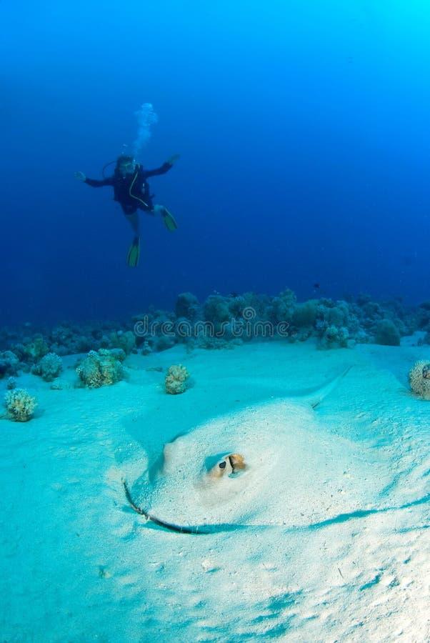 Plongeuse de femme avec un rayon photographie stock
