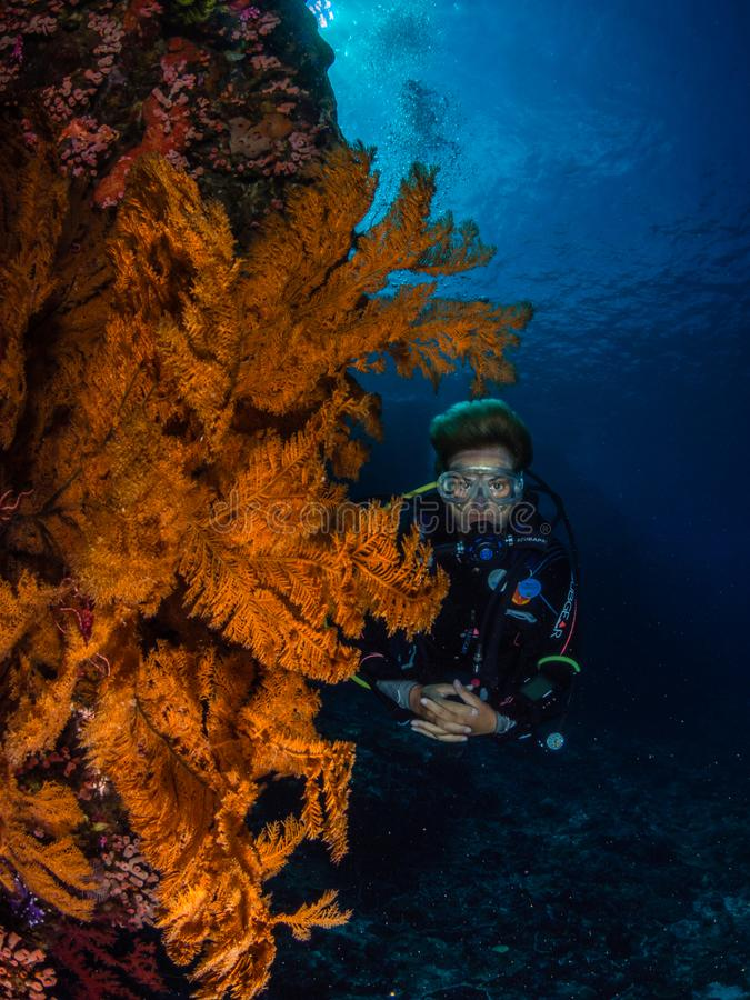 Plongeuse de Madame et gorgonian spectaculaire images libres de droits