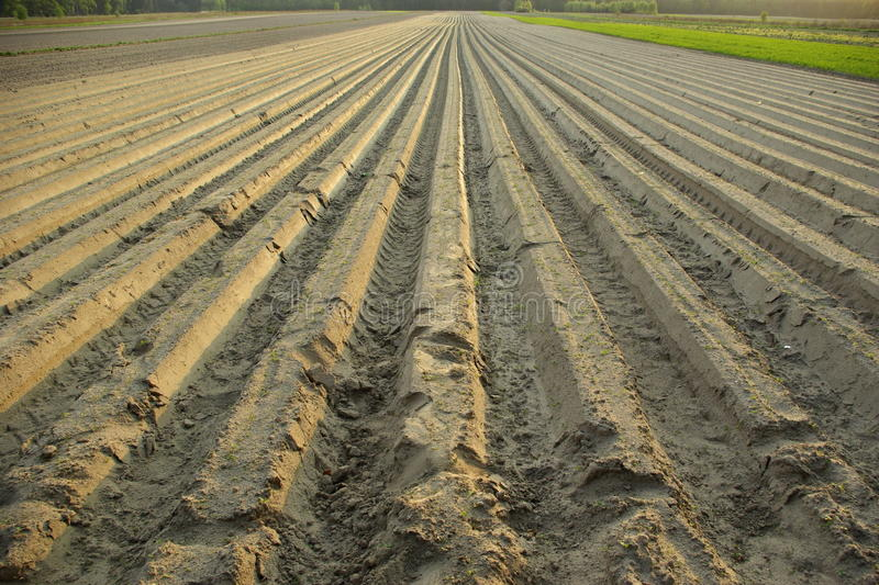 Download Ploughed field stock image. Image of furrows, recedes - 14213503