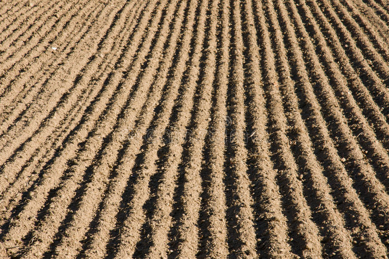 Download Ploughed field stock image. Image of earth, cultivated - 23875943
