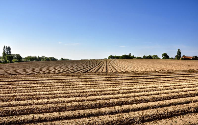 Ploughed Field Landscape of East England. View horizontal and vertical furrows of ploughed field in South Norfolk, East Anglia, England royalty free stock photos