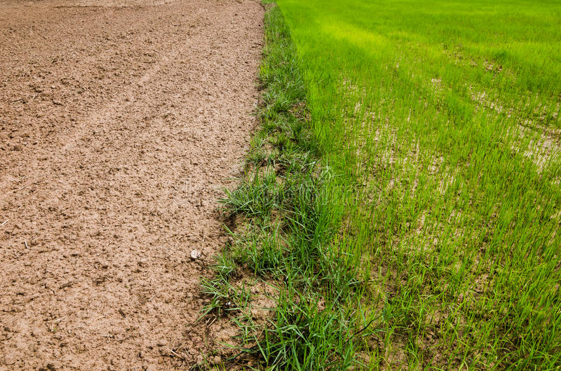 Download Ploughed field stock image. Image of outdoor, plowed - 39515117