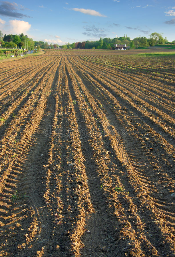 Download Ploughed Field In Spring Verti Stock Image - Image: 2966481