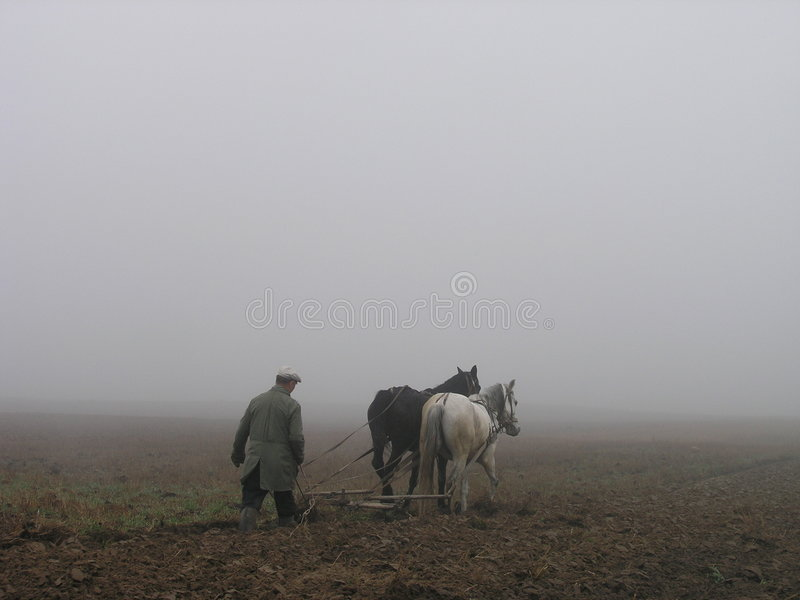 Ploughing. At the foggy dat royalty free stock photography