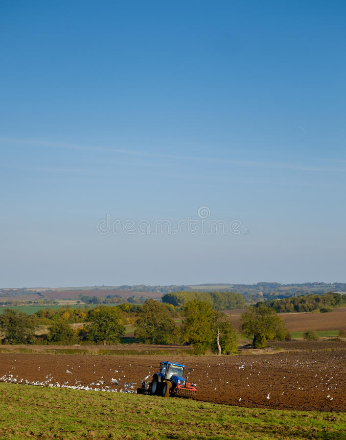 Ploughing. Birds feeding around a tractor that is ploughing in the Lincolnshire Wolds, England, UK stock image