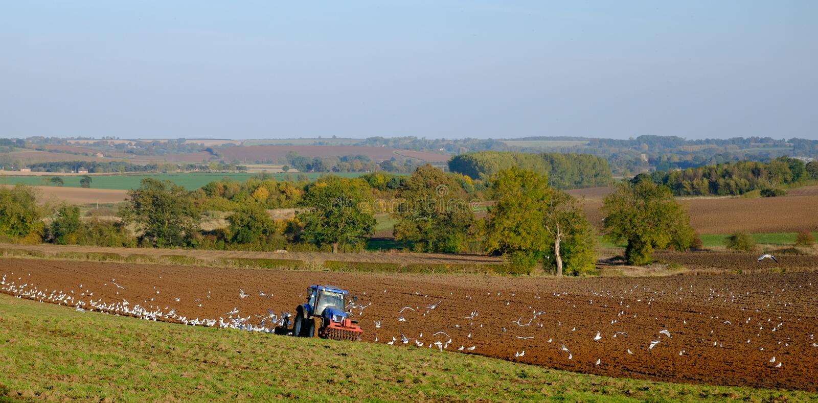 Ploughing. Birds feeding around a tractor that is ploughing in the Lincolnshire Wolds, England, UK stock images