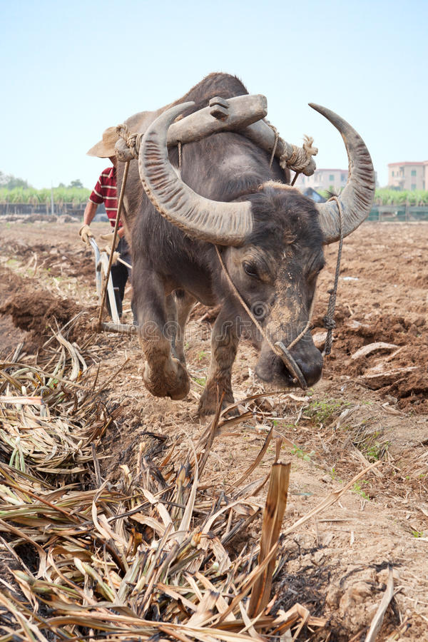 Download Ploughing field stock photo. Image of farming, plough - 24263172