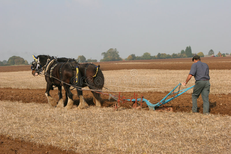 Ploughing team stock images
