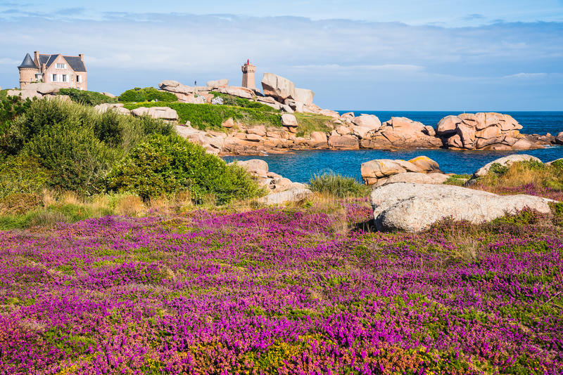 Ploumanac'h‎ Lighthouse. In a sunny day with stunning violet flowers - France 07/2016 royalty free stock photo