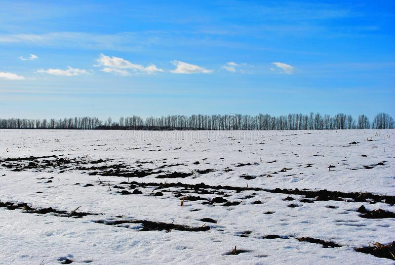 Plowded field covered with snow, trees without leaves line on horizon, winter landscape, bright blue sky. Plowded field covered with snow, trees without leaves stock photos