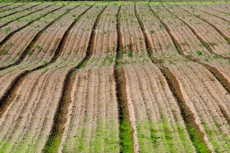 Plowed barren field royalty free stock photography