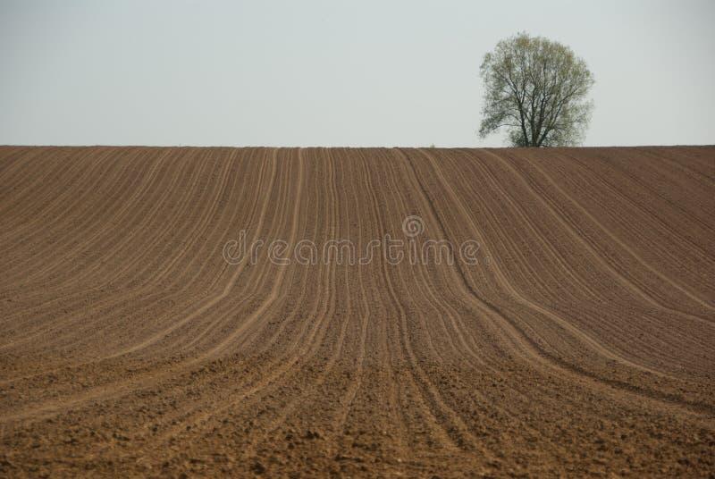 Download Plowed field stock image. Image of gray, empty, field - 21339359