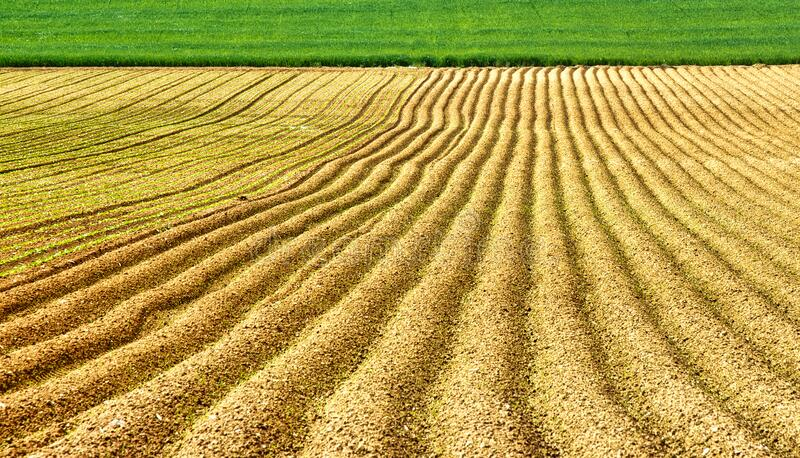 Plowed field background royalty free stock image